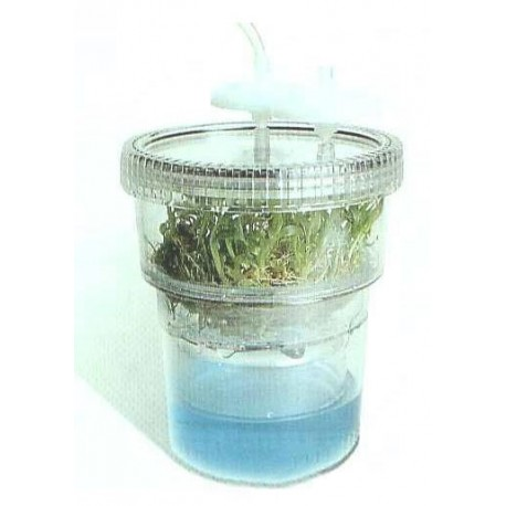 RITA® Sistema de inmersión temporal para cultivo de tejidos vegetales